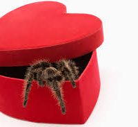 Tarantula valentine combos online only